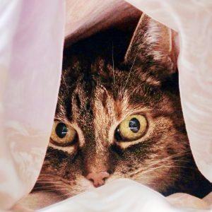 Fritzi Katze Versteck