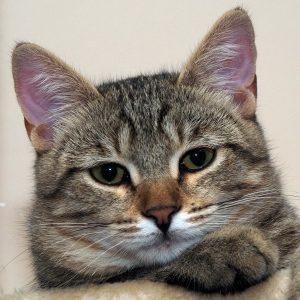 Luigi Katze